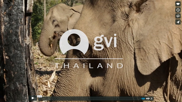 video thailand elephants