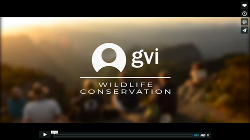video wildlife coonservation