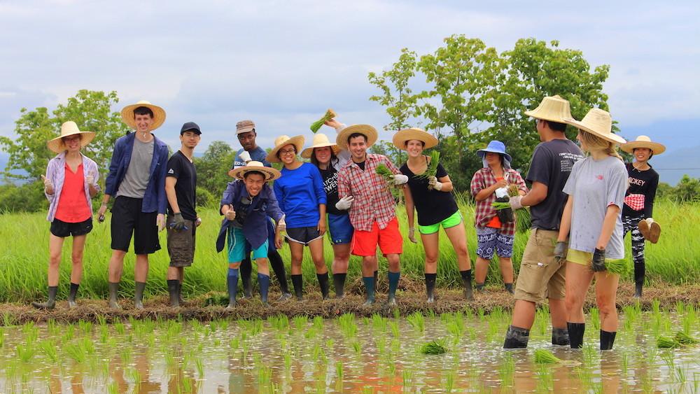 Rice Paddy at Village Homestay